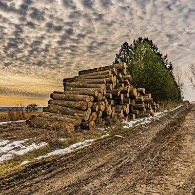 Stacks of wood by the side of a dirt road.