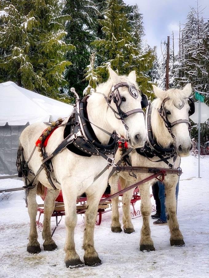 Horses at Govie