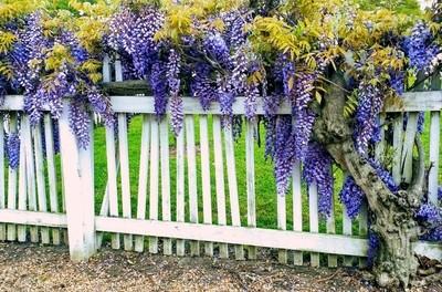 Springtime in Jamestown, Virginia.