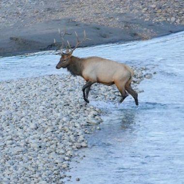 Just crossed the River near Jasper