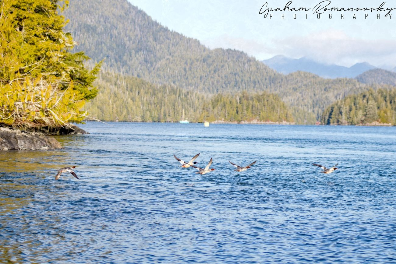 Red Billed ducks being forced into flight buy our passing boat