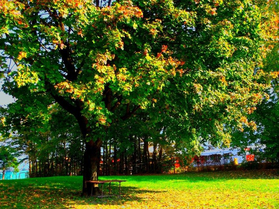 der Winter kommt die letzten grünen Blätter färben sich schon bunt