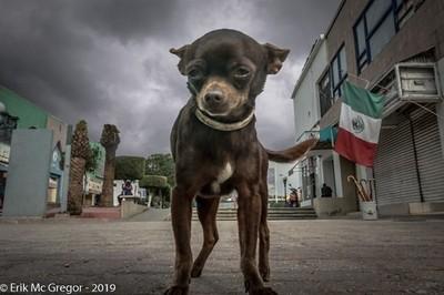 EL CAPITAN DE SU CALLE (top dog)