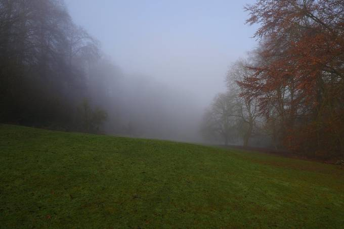 Misty tree tops today. Perfect for a lurcher to dissapear into!