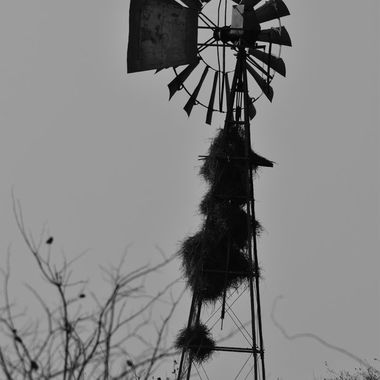 Old Windmill with bird nests observed near Mopani Rest Camp in Kruger National Park.