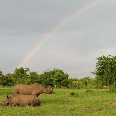 Black Rhino + Rainbow