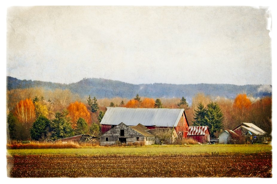 An old barn on a farm in the Skagit Valley of Washington...