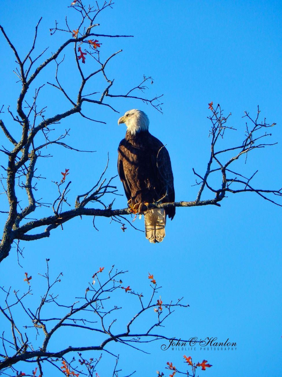 123-1 Eagle