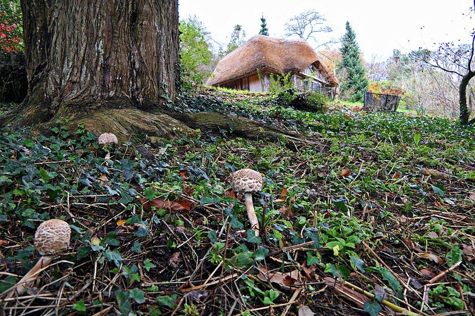 Fungi near Bears Hut-KIllerton