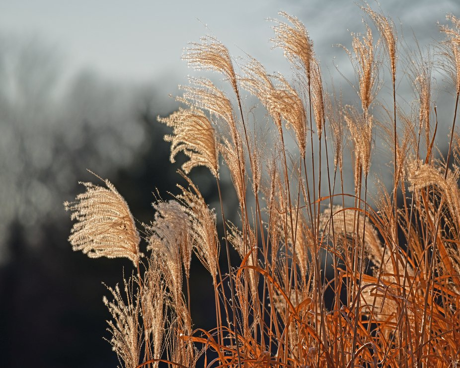 Lake shore grasses in the late afternoon sunlight