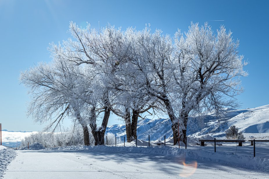 A winter tree which has no leaves on it gets decorated with snow.
