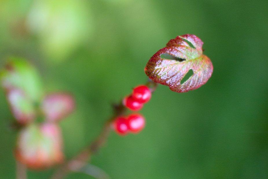 20170816 Leaf And Berries 3