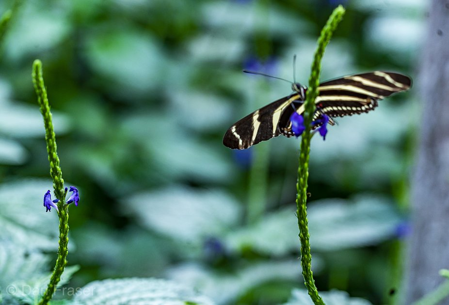 Butterfly has no symetry of wings!