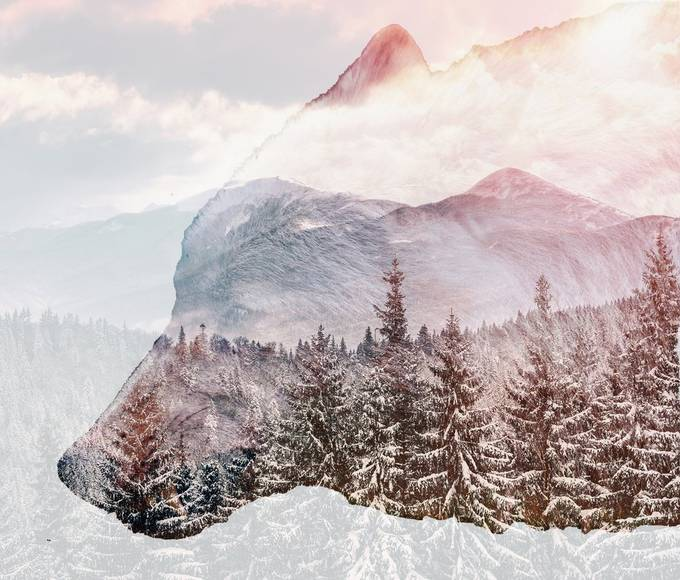 Snowy winter scene overlay on white wolf photo