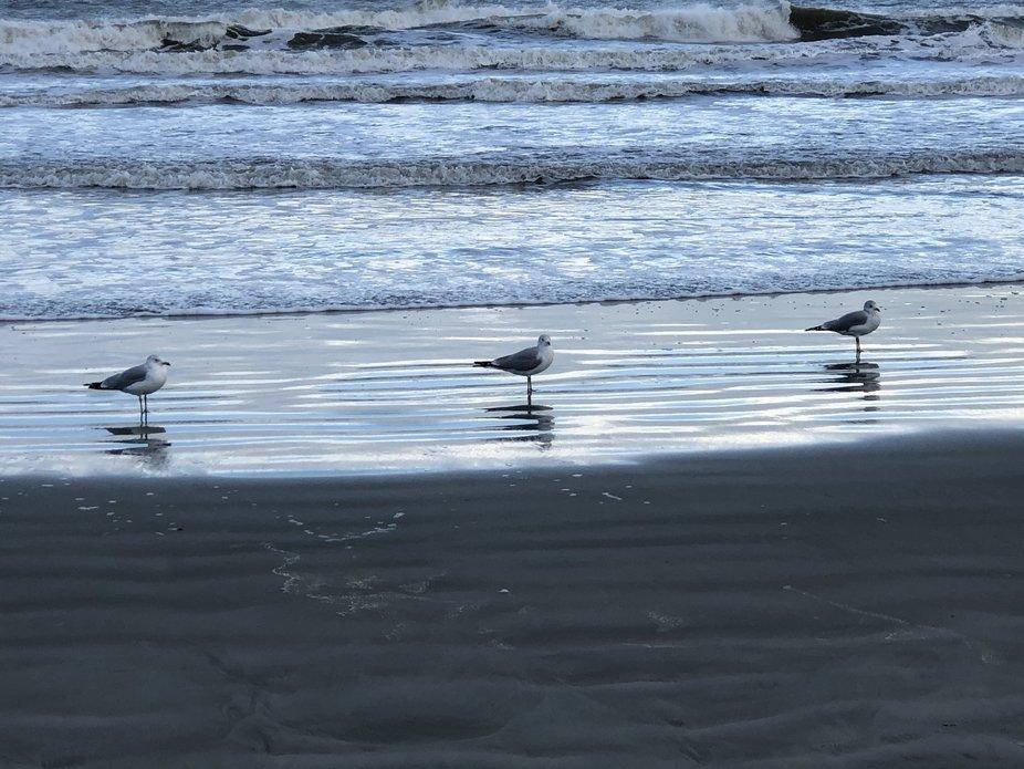 3 seagulls on the beach!