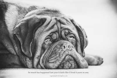 dogue life