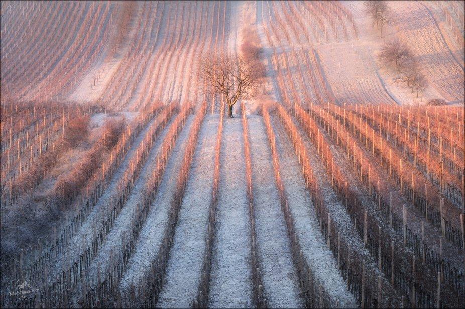South Moravia, Czech Republic  January 2020  © PHOTOTRAVEL.PRO