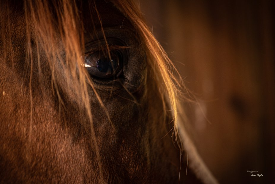 Ginny, my daughter's horse