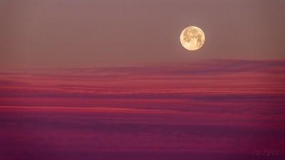 Wolf moon at sunrise