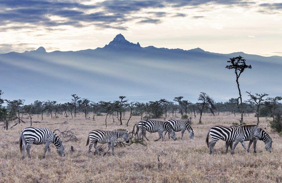 Mt Kenya and Wildlife