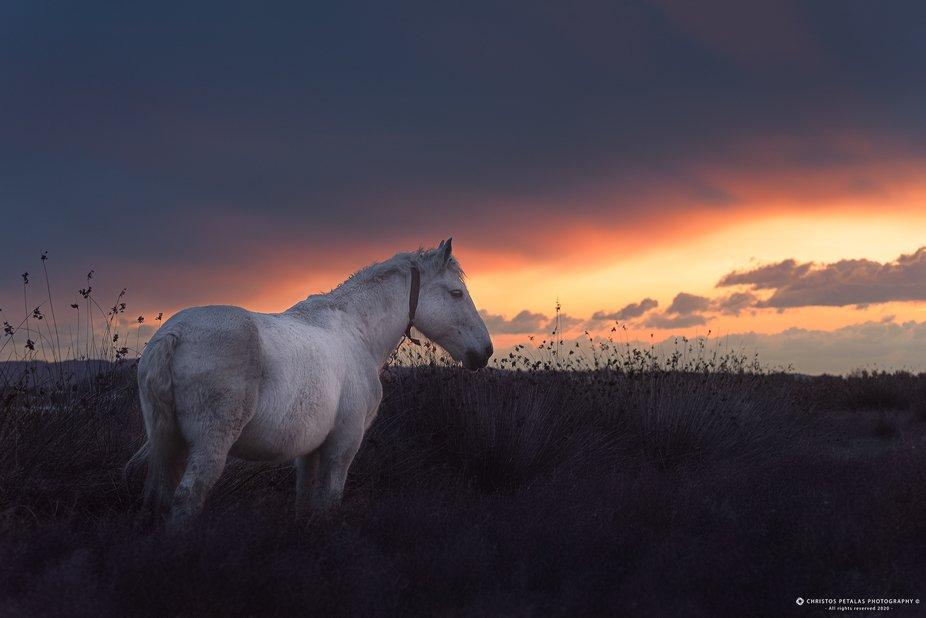 Horse gazing
