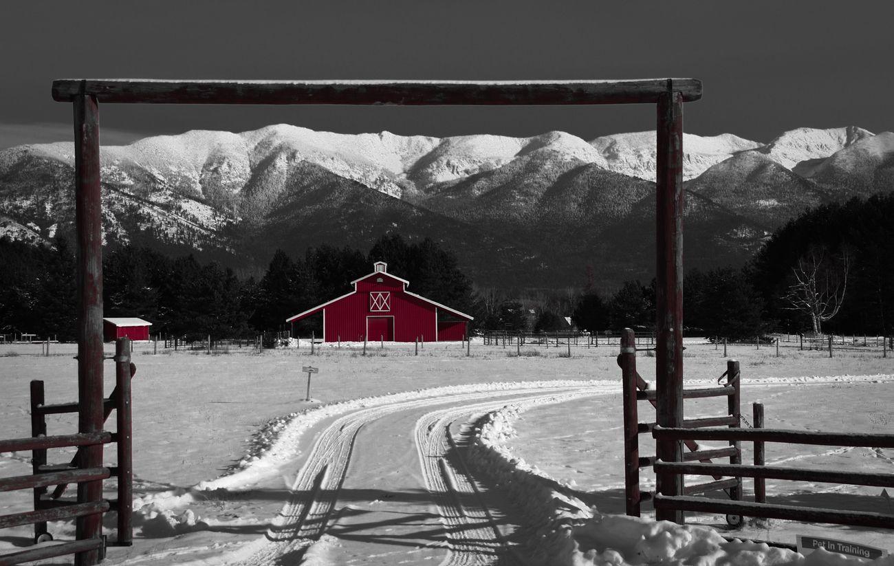 NW Montana winter scene