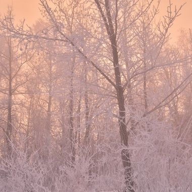 Shot this at sunrise along Rainy River in January