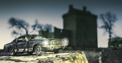 Morning Mustang