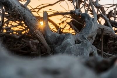 deadwoodun tronco de árbol abandonado a la erosión junto a las salinas de Tenefé, Gran Canaria