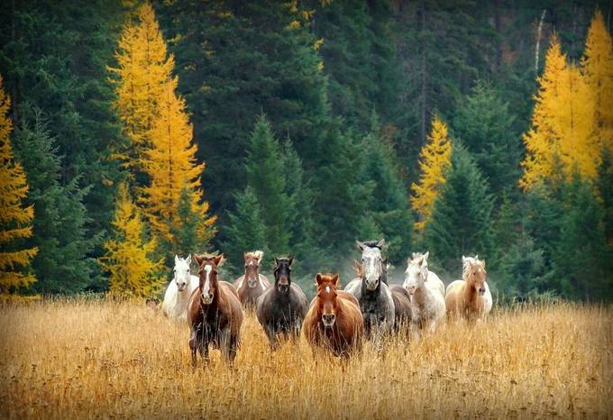 The Joy of Running by katherineplessner - In Love With Horses Photo Contest