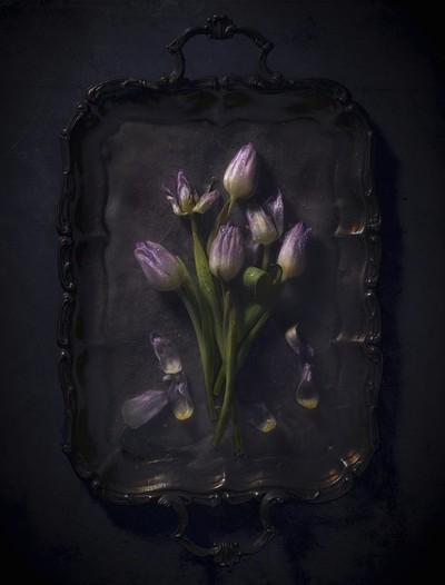 tulips_one