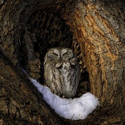 The Sunbathing Owl