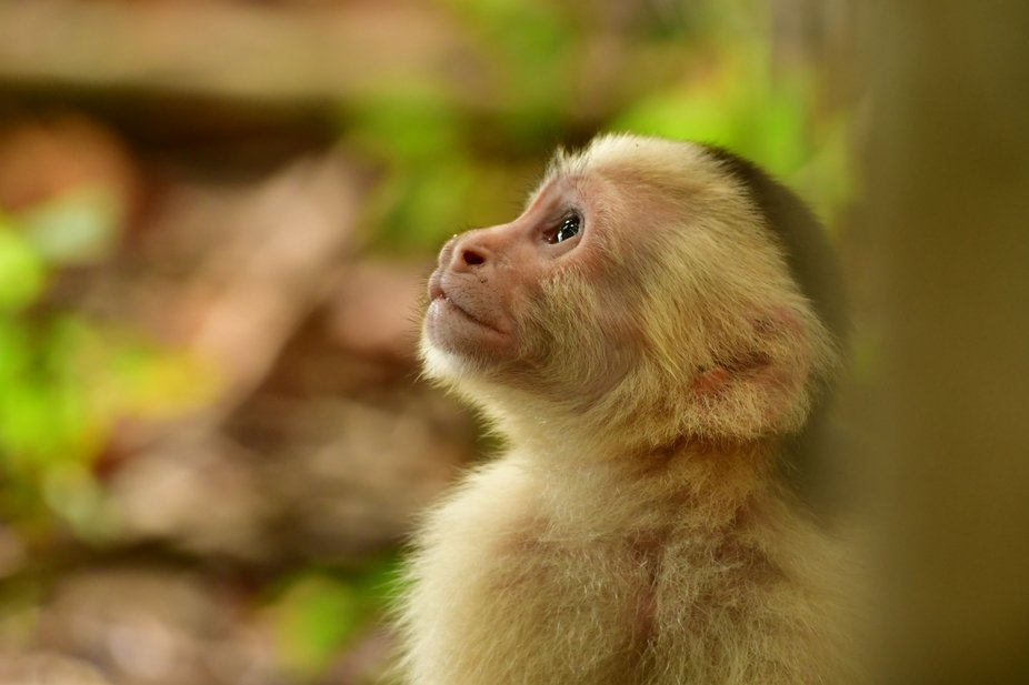 Just an emotional looking monkey in Costa Rica