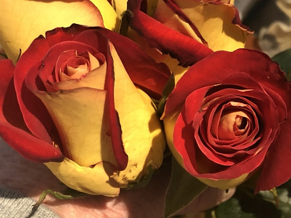 Love/Red Roses