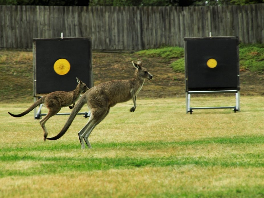 Sometimes it's good to carry a camera when you go to an archery range, you never know wh...