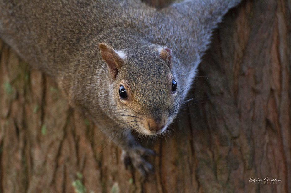 While many in the Eastern US consider squirrels to be nuisances, they are a productive part of ou...