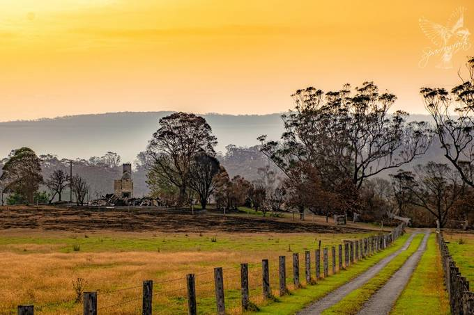 Captured on sunset during the bushfires, with smoke still in the air. Once, nestled amongst the trees was a beautiful Australian homestead, big verandas and painted white, I drove past it for years and always admired the picturesque beauty, now lost Camera: Nikon D5300 Lens: NIKKOR 18.0-140.0 mm f/3.5-5.6 Focal Length: 62.00mm Exposure: 1/200 sec; f/10; ISO100 #Sparrowfartss https://www.sparrowfarts.com/
