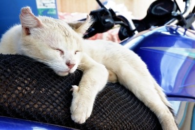 Nap on motorcycle