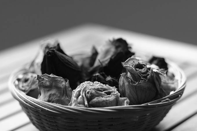 Black and white dried roses