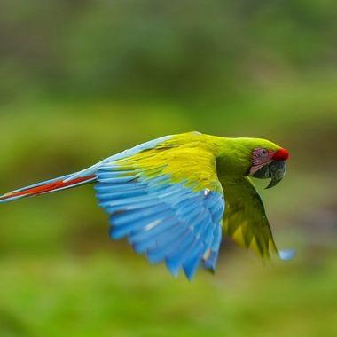 Macaw DSC00392