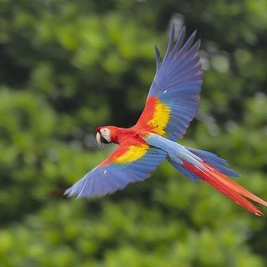 Macaw DSC01031