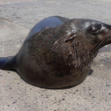 Seal HB