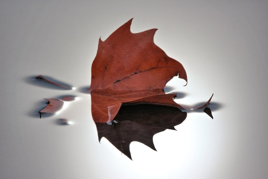 Just a simple leaf, quiet and peaceful.