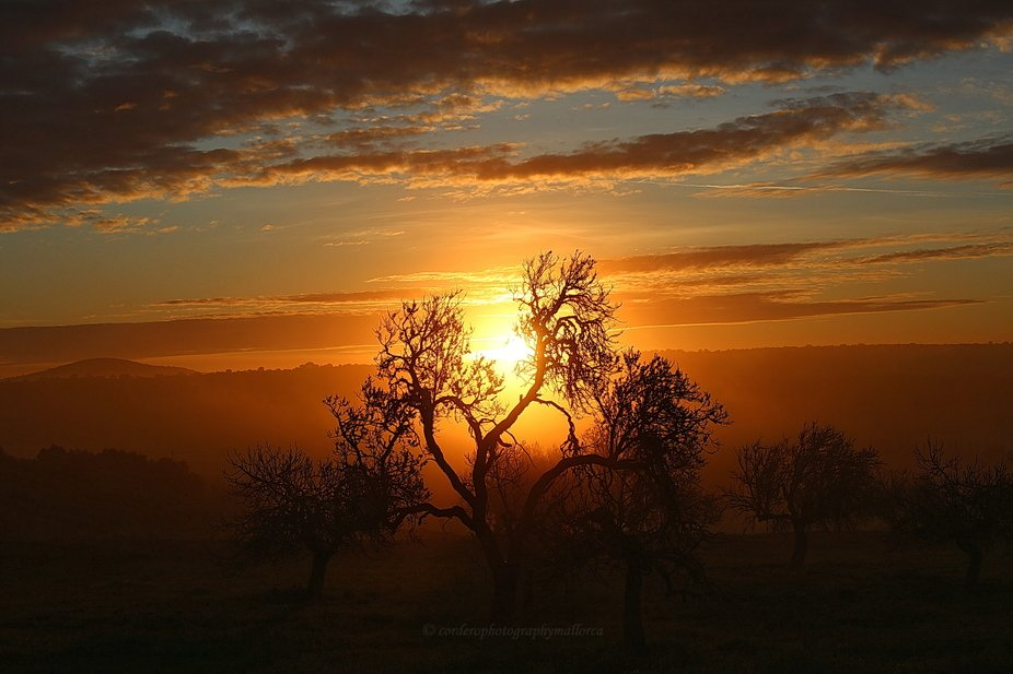 Silhouette of a tree as the sun rises - contrasting pastel colours, some mist and strong light fr...