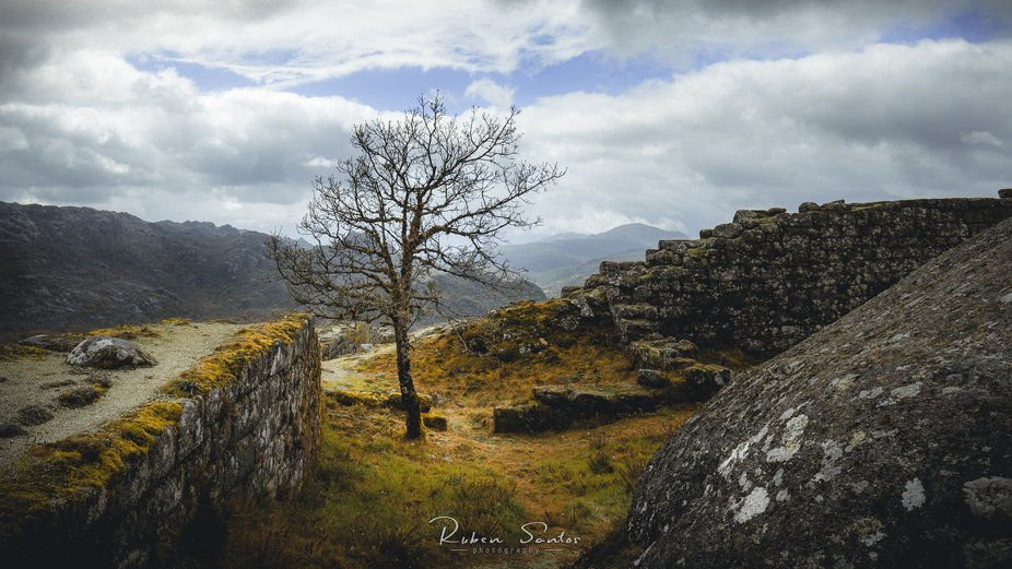 Lost between the castle walls, the lonely tree resists the harsh climate of the mountain.  Castro...