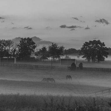 Near Sunset on a misty evening  _DSC6063