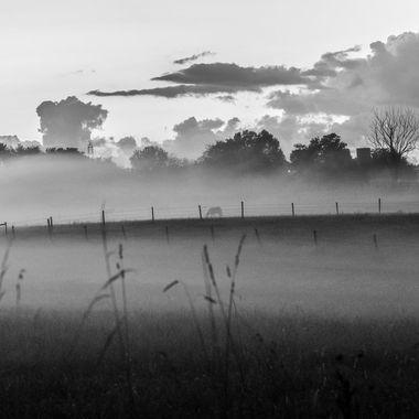 Misty farmland  _DSC6072