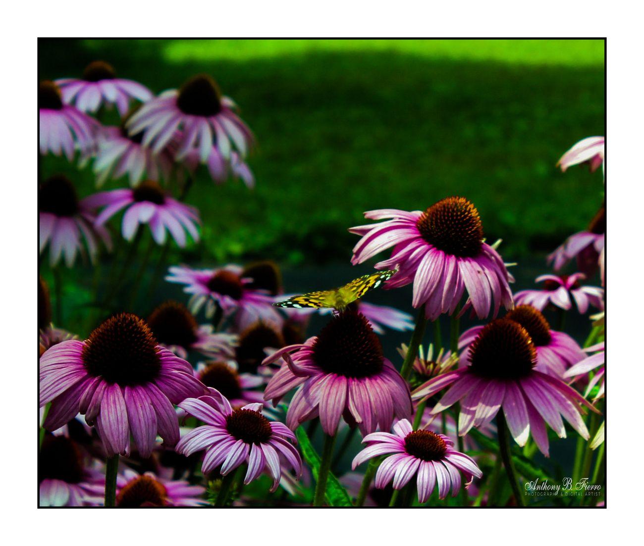 Butterfly (6)