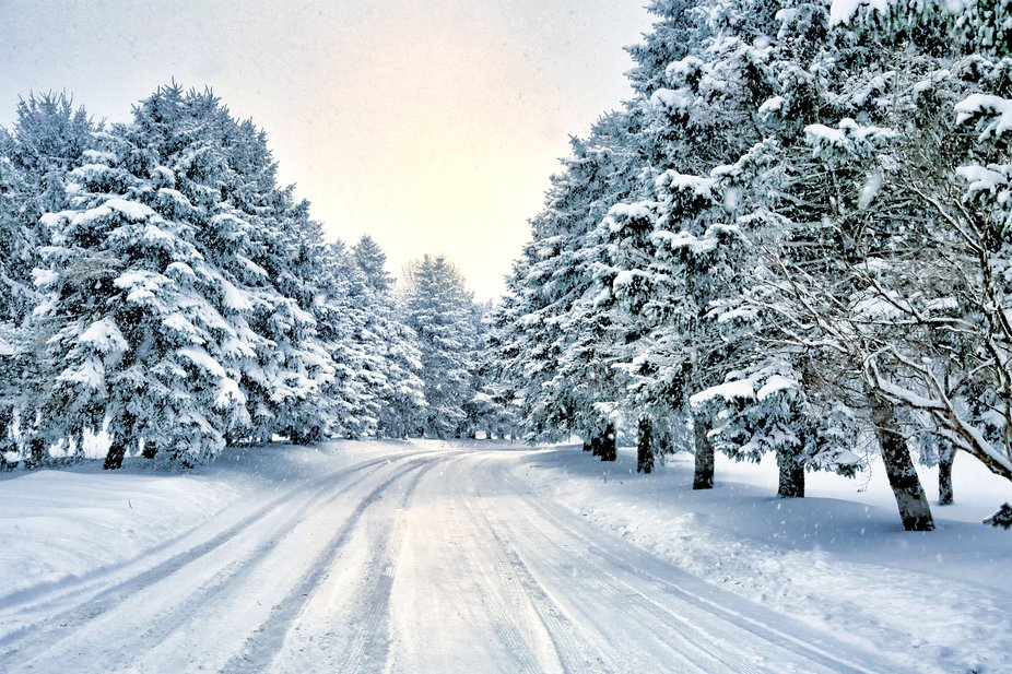 Winter back road with snow laden pine trees