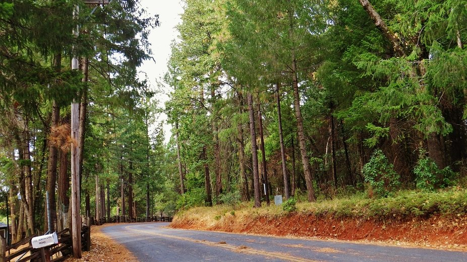 Forest Road through Apple Hill, CA.